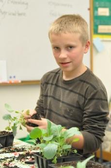 garden sam planting