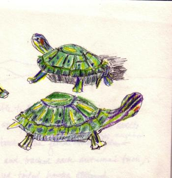 green turtles