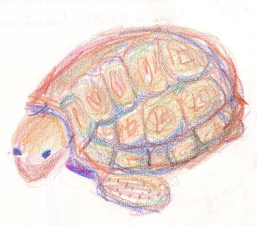 redblue turtle