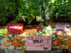 garden seedling sale