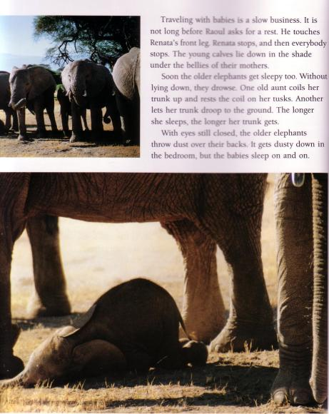 books Elephants Calling page cropped