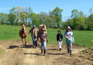 Farm School horses and kids