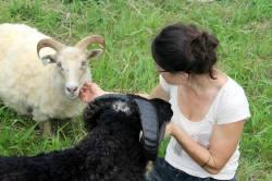 farming Addie and sheep 2