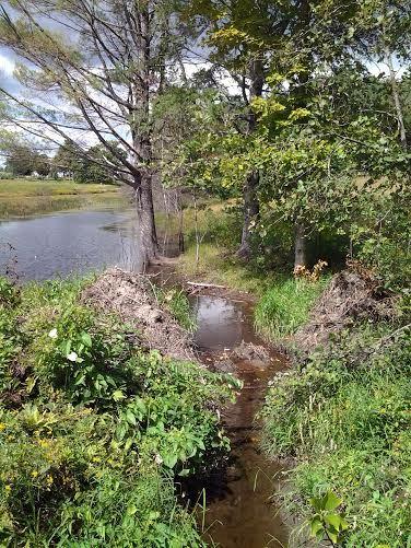 beaver edits dam site