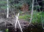 beaver edits lodge