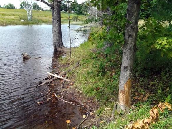 beaver edits tree damage