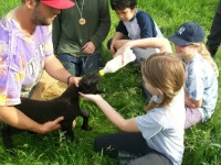 Farm School 2012 mine black lamb